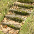 Mossy Staircase with Fallen Maple Leaves - Stock Photo