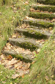 Mossy Staircase with Fallen Maple Leaves — Stock Photo