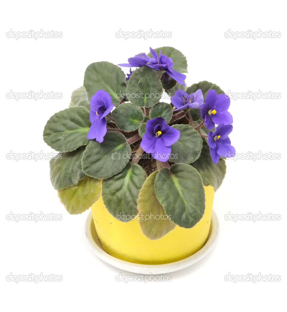 Pictures of Beautiful Flower Pots http://depositphotos.com/4254478/stock-photo-Beautiful-Violet-Flower-in-Pot.html