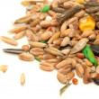 Hamster Food Mix - Stockfoto