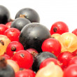 Stock Photo: Black, Red And White Currants