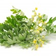 Wormwood on White Background — Stock Photo #5137999
