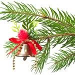 Christmas bluebell — Stock Photo