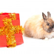 Rabbit and red giftbox — Stock Photo