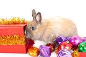 Młodego królika i wielu piłka varicoloured — Zdjęcie stockowe