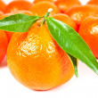 Many tangerine — Stock Photo