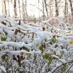 Winter sun forest — Stock Photo #4378650
