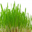 Grass growing from roots — Stock Photo #5028952