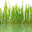 Young grass and water — Stock Photo