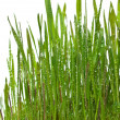Grass growing — Stock Photo #5358218