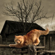 Stock Photo: Red cat