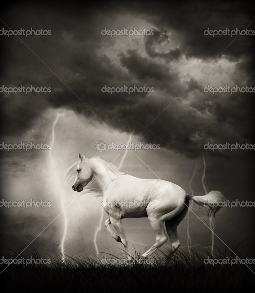 White horse under thunder sky with lightning. Monochrome — Stock Photo #4217334