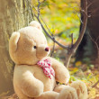 Light brown teddy bear — Stock Photo #4444363