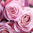 Close-up of pink roses — Stock Photo