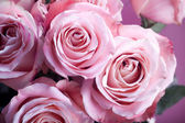 Close-up of pink roses — Stock fotografie