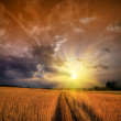 Rural landscape with wheat field on sunset — Stock Photo #4948017