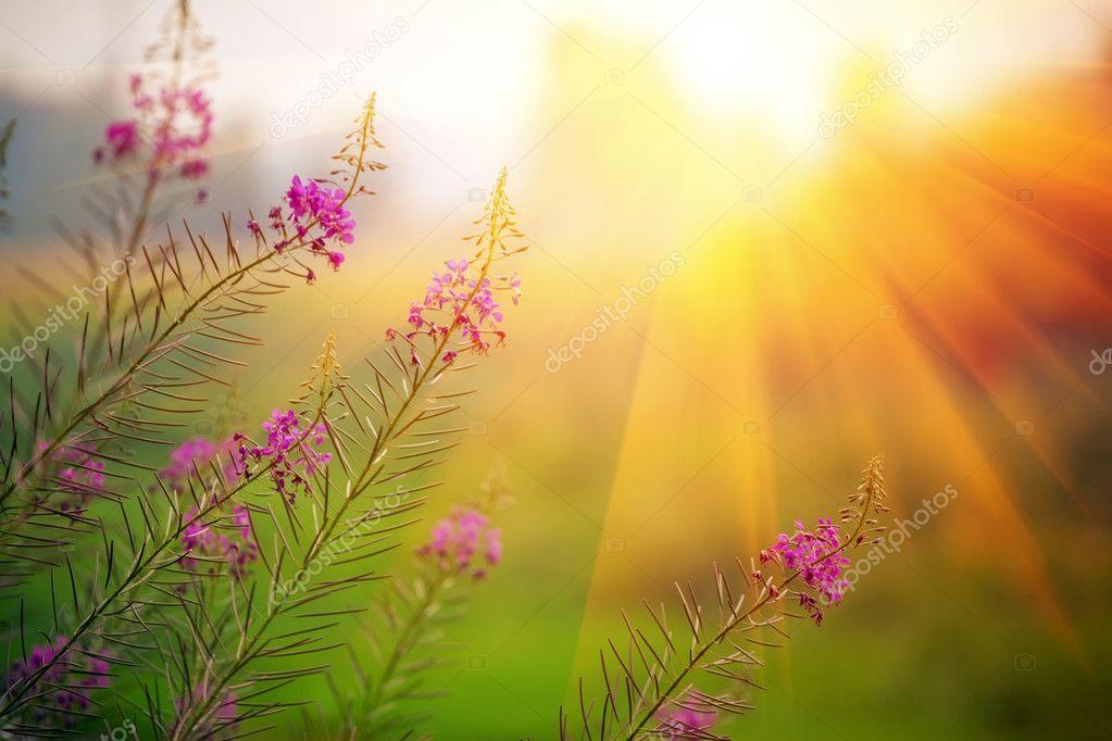 Фотообои Пейзаж на закате