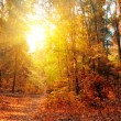 Autumn Forest Panorama — Stock Photo #5014553