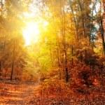 Autumn Forest Panorama — Stock Photo