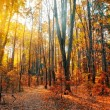 Autumn Forest Panorama — Stock Photo #5018361