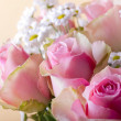 Stock Photo: Blossom pink rose