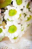 Blossom witte chrysanths in boeket — Foto de Stock