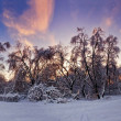 Winter forest panorama at sunny evening — Stock Photo