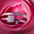Close-up of pink rose with diamond rings — Foto de Stock