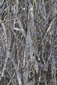 Tree branches covered with ice — Stock Photo