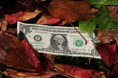 One dollar bills on a leaf background — 图库照片