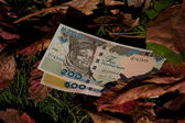 Two Nairaz bills on a leaf background — Stock Photo