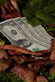 Four dollar bills on a leaf background — Stockfoto
