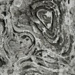 Stock Photo: Natural distressed bark of tree trunk
