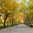 Central Park, New York. Beautiful park in beautiful city. — Foto de Stock