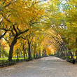 Central Park, New York. Beautiful park in beautiful city. — Stock Photo