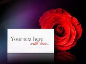 Rose ile fark — Stok fotoğraf