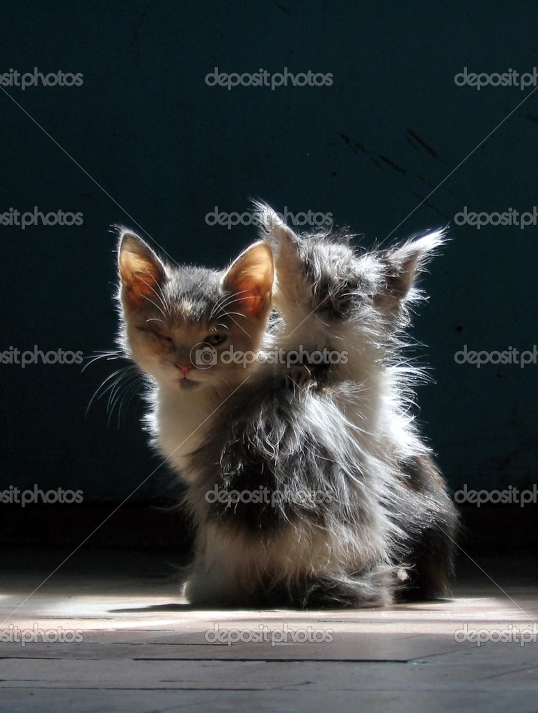 Two small kittens are heated in rays of light. Black background. — Stock Photo #5074972