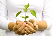 Plant in female hands — Stock Photo