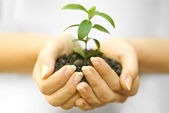 Plant in female hand — Stock Photo