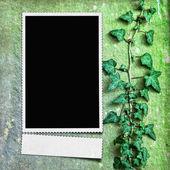 Framework for invitation or congratulation. — Stockfoto