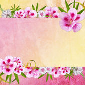 Background for congratulation card — Stock Photo