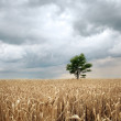 Field before the rain — Stock Photo #4566482