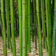 Stock Photo: Bamboo forest. Zen