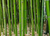 Bamboo forest. Zen — Stock Photo