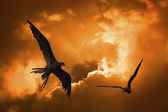 Birds in the sunset — Foto Stock