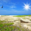 Iguana on the beach - Stock Photo
