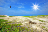 Iguana on the beach — Stock Photo