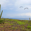 Aruba landscape — Stock Photo