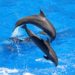 Dolphins jumping — Stock Photo #5131948