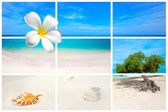 The Caribbean island Aruba — Stock Photo